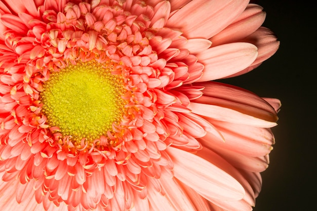 クローズアップ珊瑚色の花 無料写真