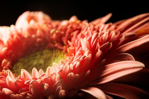 クローズアップ珊瑚色の植物 無料写真