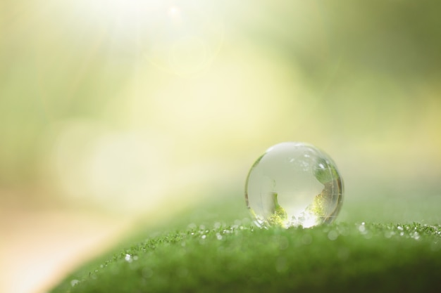 クリスタルグローブの森の芝生の上で休んでのクローズアップ 無料写真