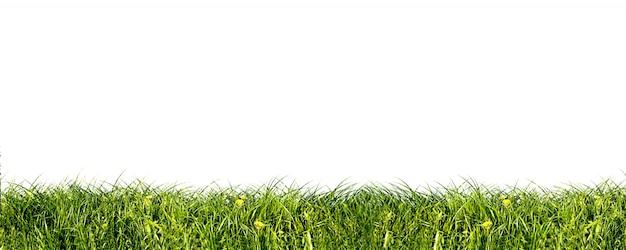 신선한 잔디의 클로즈업 무료 사진