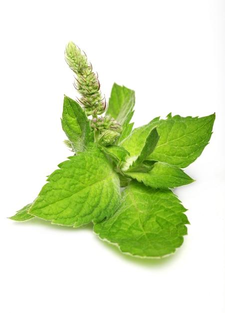 新鮮なミントの葉のクローズアップ 無料写真