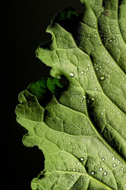 水滴でクローズアップ緑の葉の神経 無料写真