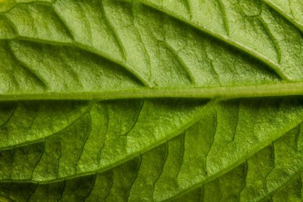 クローズアップ緑の葉の神経 無料写真