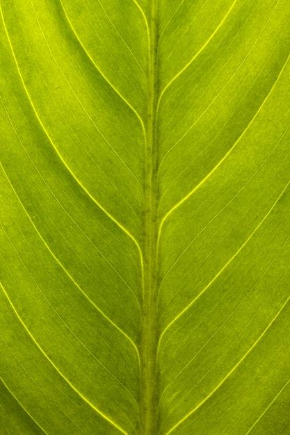 緑の葉の表面の拡大図 Premium写真