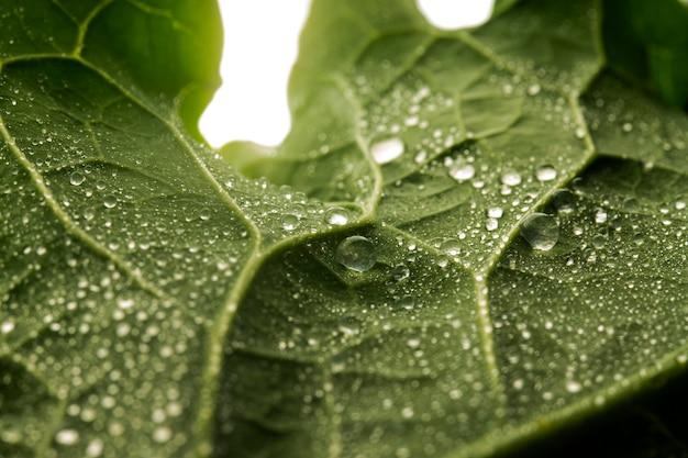 水滴とクローズアップ緑の葉 無料写真