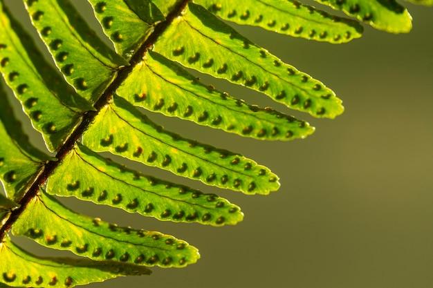 クローズアップ緑の植物の葉 無料写真
