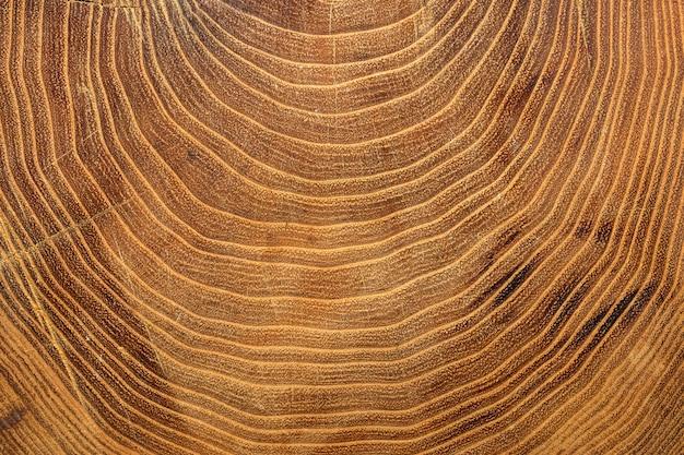 木の成長リングのクローズアップ 無料写真