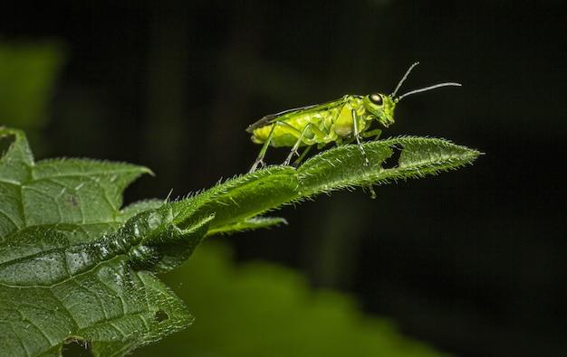 Крупным планом насекомых на зеленом листе Бесплатные Фотографии