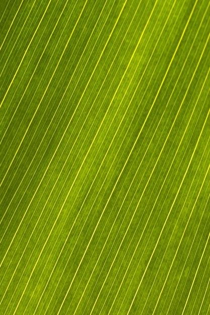 葉の表面のクローズアップ Premium写真