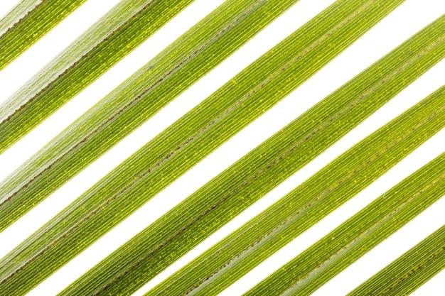잎의 클로즈업 무료 사진