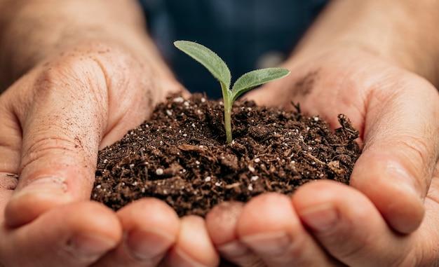 土と小さな植物を保持している男性の手のクローズアップ 無料写真