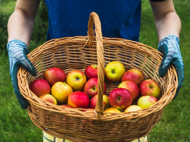 Close up of man s hand holding basket of red apple 23 2147844338