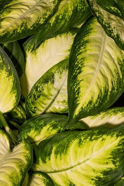 색깔 된 가장자리와 식물 잎의 클로즈업 무료 사진