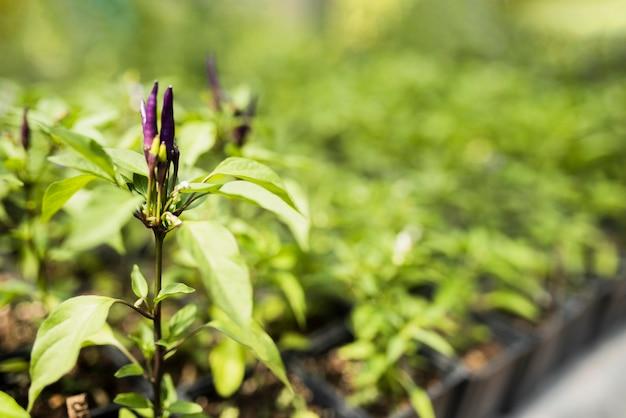 紫の花を持つ植物のクローズアップ 無料写真