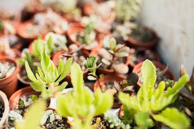 茶色の鍋に植物のクローズアップ 無料写真