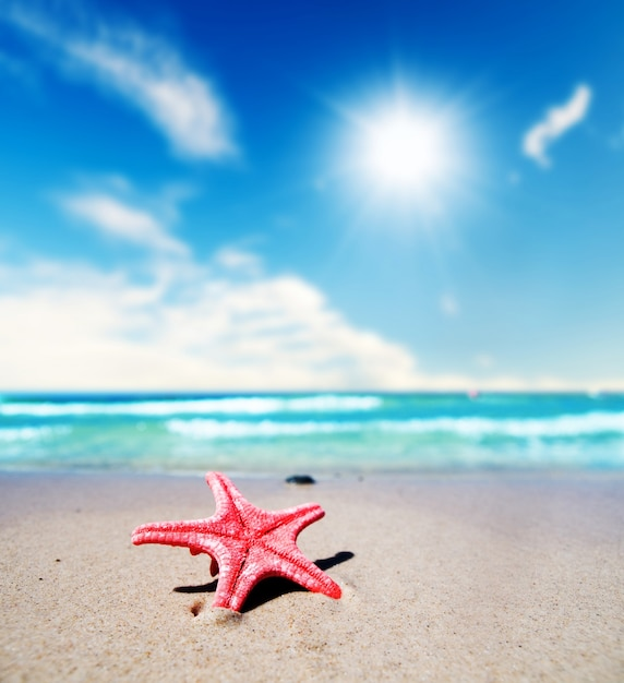 Close-up of pretty starfish on a summer day Photo | Free ...