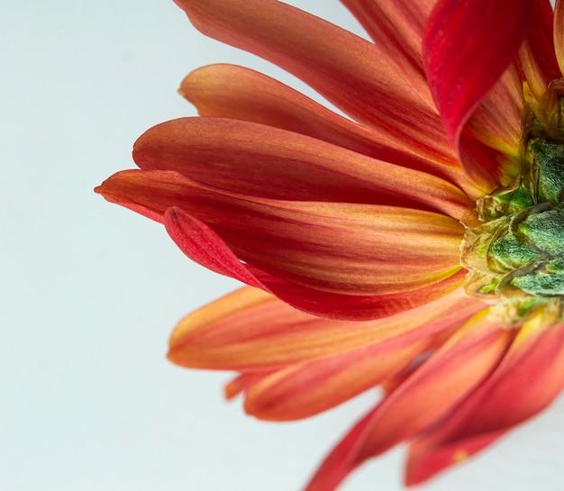 赤い花のクローズアップ Premium写真