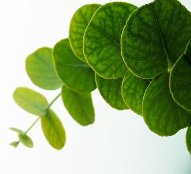 クローズアップ丸い緑の葉 無料写真