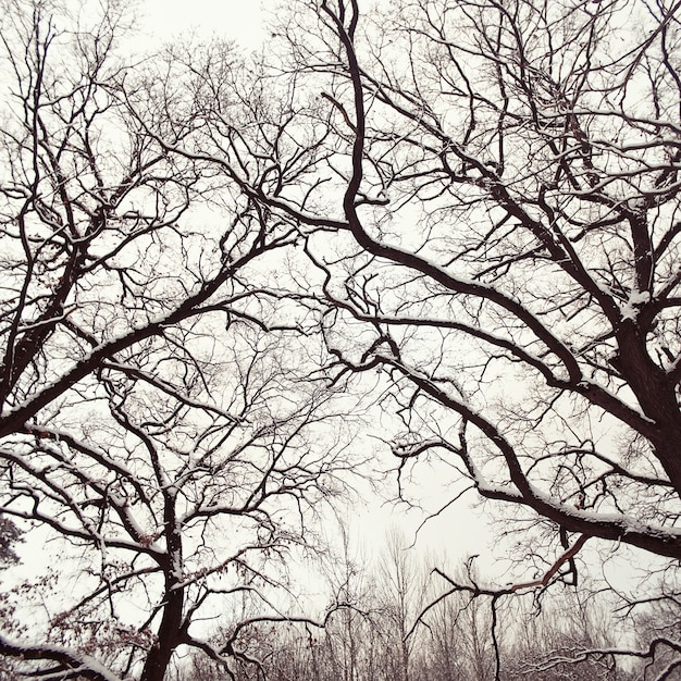 Close-up of snowy trees without leaves Photo | Free Download