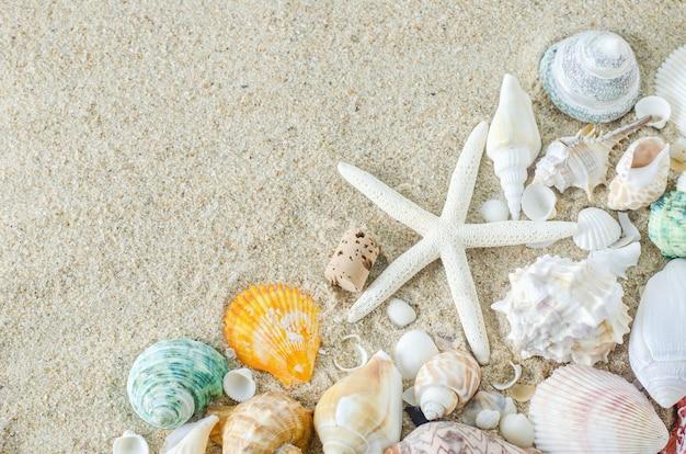 白い砂の背景にヒトデと貝殻のクローズアップ Premium写真