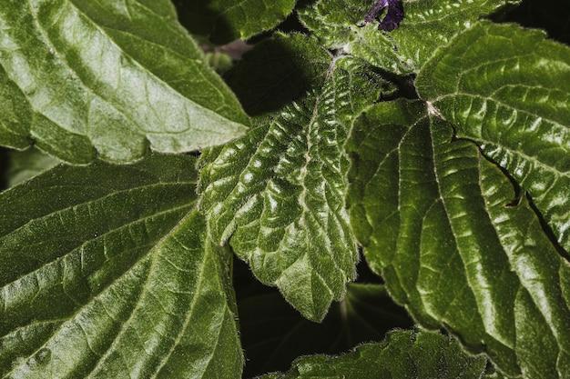 식물 잎의 클로즈업 무료 사진