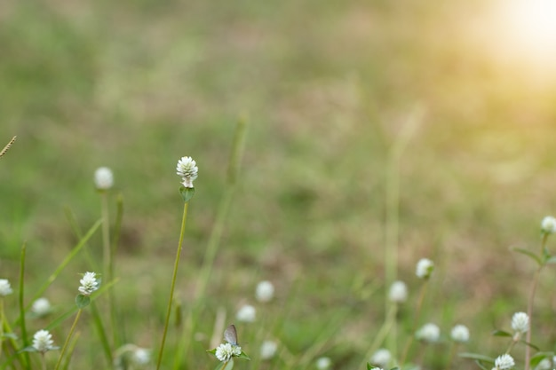 Close up of white meadow flowers in field or grass flower photo close up of white meadow flowers in field or grass flower premium photo mightylinksfo