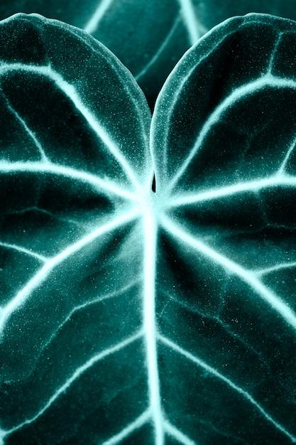 Крупный план листьев ксантозомы Бесплатные Фотографии