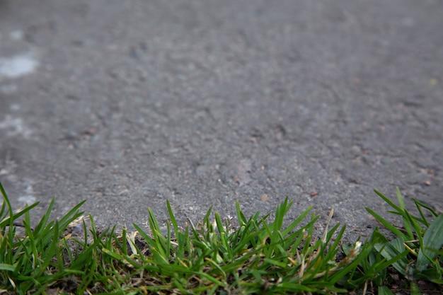 Крупным планом на земле на открытом воздухе с зеленой травой и асфальтом Premium Фотографии