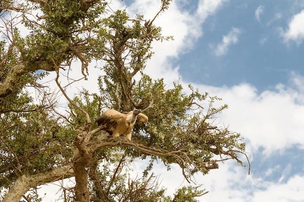 Крупным планом стервятник на дереве Premium Фотографии