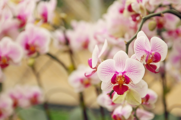 Close up of orchids bouquet with natural background Premium Photo