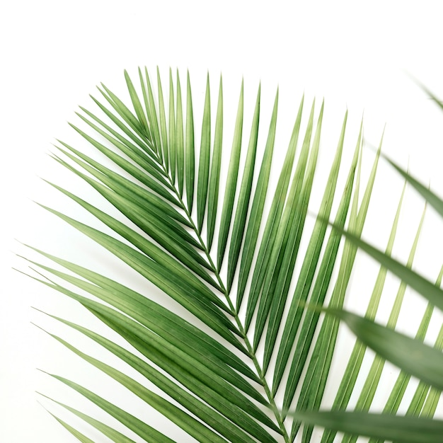 Close-up of palm leaves on white backdrop Free Photo