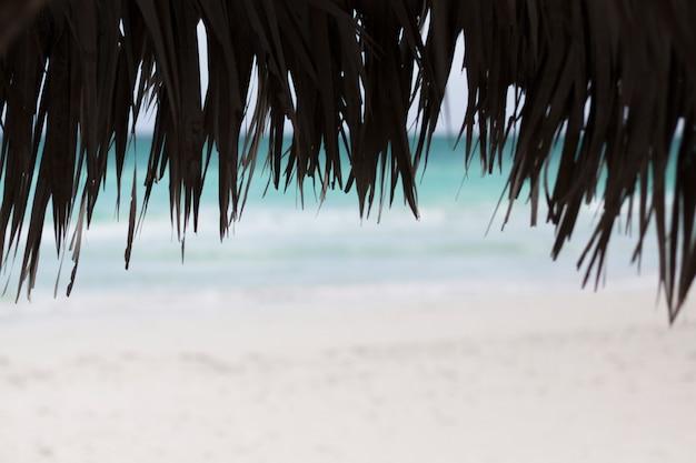 Close up of palm umbrellas at beach Free Photo