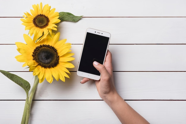 Close-up of a person holding cell phone near the yellow sunflowers on white wooden table Free Photo