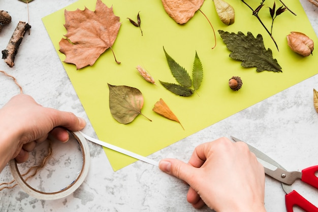 Close-up of a person's hand decorating the green paper with autumn leaves Free Photo