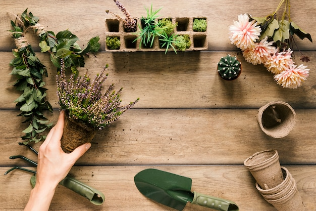 Close-up of a person's hand holding plant with gardening equipments; flower; peat pot; peat tray on wooden table Free Photo