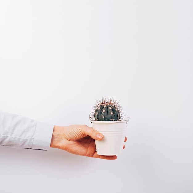 Close-up of a person's hand holding succulent plant on white background Free Photo
