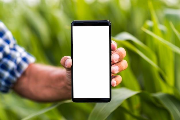 クローズアップ電話、トウモロコシ畑のモックアップ Premium写真