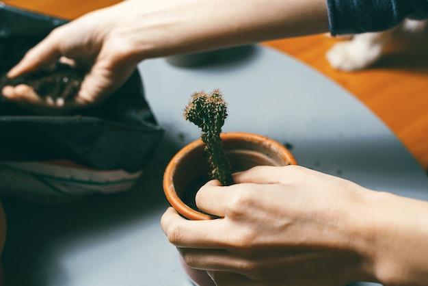 Крупным планом фото руки женщины, покрывающей маленький кактус дома в небольшом цветочном горшке и добавляющего почву Premium Фотографии
