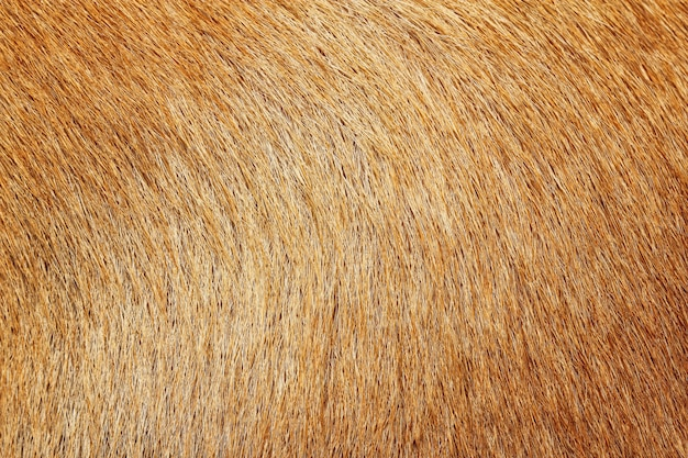 Close up picture on the animal fur, suitable as a background Premium Photo