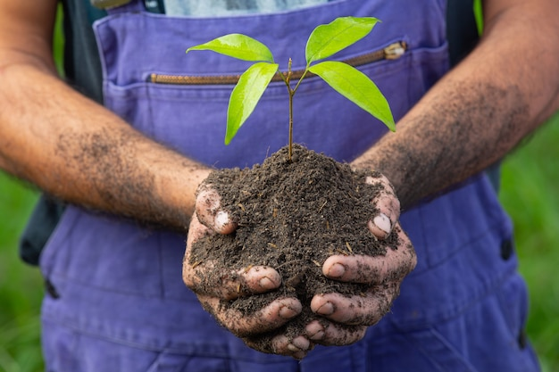 Close up picture of gardener's hand holding the sapling of the plant Free Photo