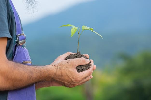 Primo piano immagine della mano del giardiniere che tiene l'alberello della pianta Foto Gratuite