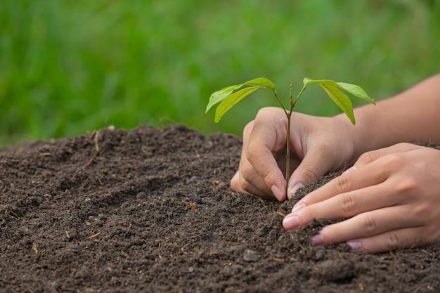 Primo piano immagine della mano che tiene piantare l'alberello della pianta Foto Gratuite