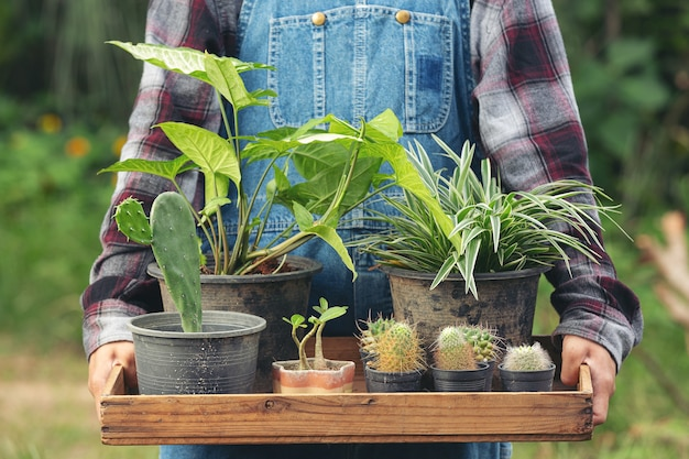 Close up picture of hand holding  wooden tray which full of pots of plants Free Photo