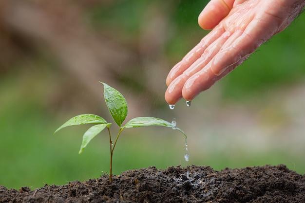Крупным планом изображение ручного полива саженца растения Бесплатные Фотографии