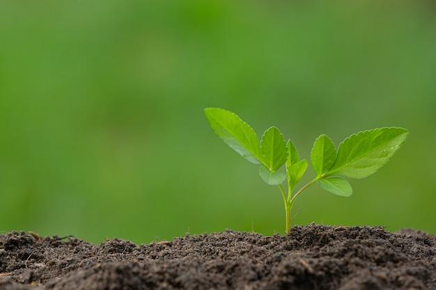 식물의 묘목이 자라는 사진을 닫습니다. 무료 사진