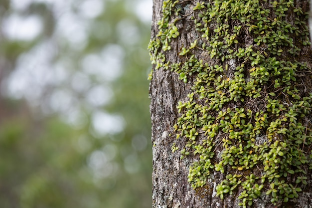 Close up picture of trunk of fresh tree Free Photo
