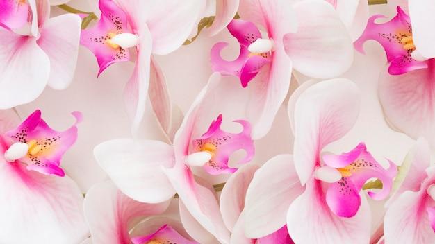 クローズアップのピンクの蘭 Premium写真