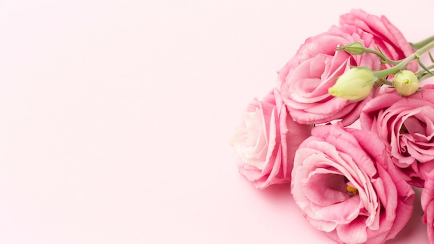 Close-up pink roses with copy-space Free Photo