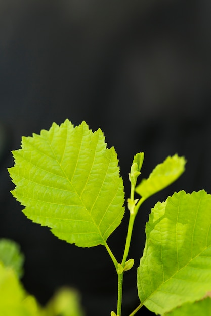 Close-up plant leaves with defocused background Free Photo