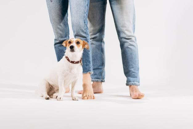 Закройте вверх по портрету собаки с желтыми цветками изолированной на белой предпосылке с симпатичными парами позади. празднование валентина, женский день. любовь и концепция счастливой семьи. Premium Фотографии